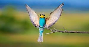אופטימיות יתר ופסימיות יתר בנדלן - ממעוף הציפור