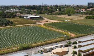 השקעה בקרקע חקלאית - בין העיר למושב